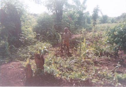 uganda-blog