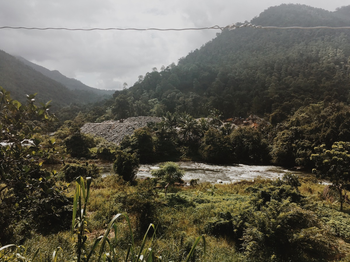 Photographs from the jungle