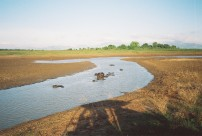 Water Buffalo, Uda Walawe