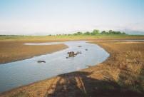 Water Buffalo, Uda Walawe