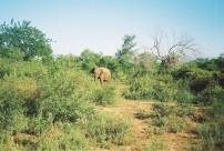Elephant, Uda Walawe